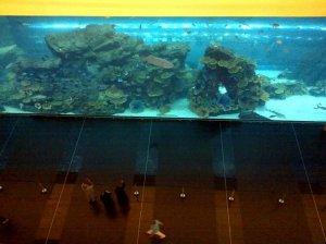 Dubai Aquarium from the upper floor