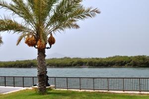 Mangrove at Khor Kalba