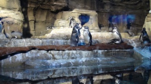 Penguin in the mall. Only in Dubai Underwater Zoo