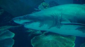 Shark is a kid's favorite in Dubai Aquarium