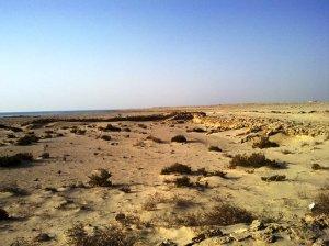 Zikreet Fort ruins