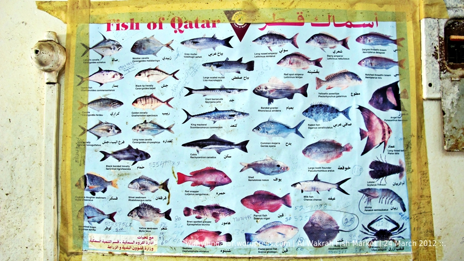 Al wakrah fish market cgk doh for Good fish names