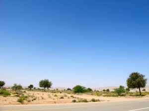 Acacia Forest (are you kidding?) between Sur and Ras Al Jinz