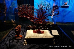 Coral display at Coral Shop on the observatory level