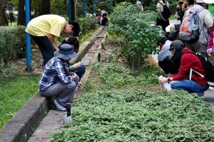 Plant enthusiasts have an educational tour to Taipei Botanical Garden