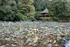 Lotus Pond at Taipei Botanical Garden