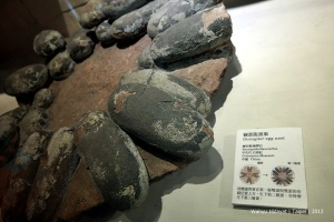 Oviraptor Egg Nest at Land Bank Exhibition Hall