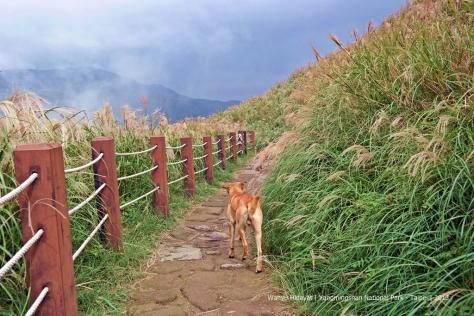 Hiking Trail through tall clumping silvergrass