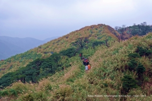 wind-sheared vegetation areas in Yangmingshan
